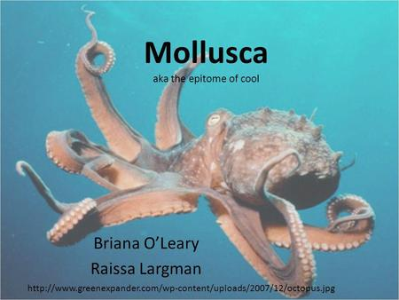 Mollusca aka the epitome of cool Briana OLeary Raissa Largman