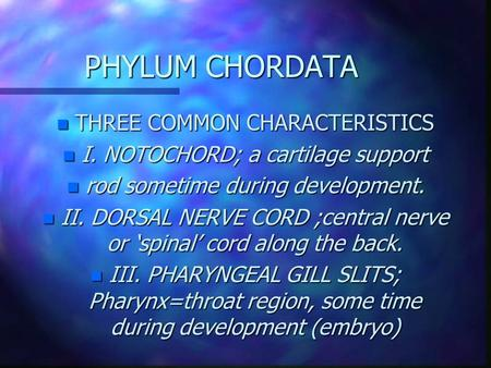PHYLUM CHORDATA THREE COMMON CHARACTERISTICS