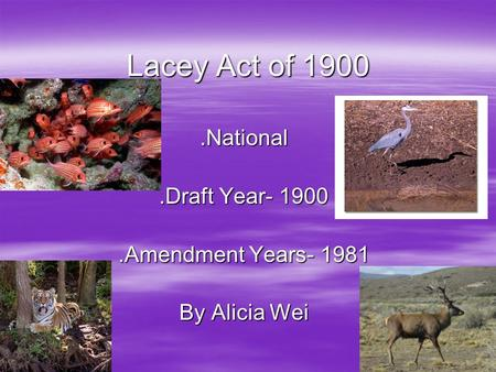 Lacey Act of 1900.National.Draft Year- 1900.Amendment Years- 1981 By Alicia Wei.