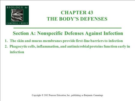 CHAPTER 43 THE BODYS DEFENSES Copyright © 2002 Pearson Education, Inc., publishing as Benjamin Cummings Section A: Nonspecific Defenses Against Infection.