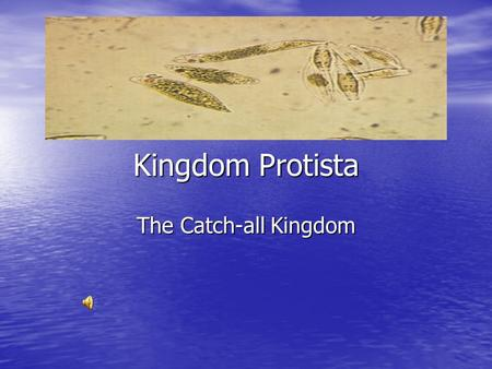Kingdom Protista The Catch-all Kingdom Protista The protist kingdom is broken down into three main groups. The protist kingdom is broken down into three.