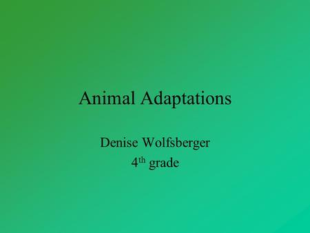 Animal Adaptations Denise Wolfsberger 4 th grade.