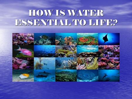 HOW IS WATER ESSENTIAL TO LIFE?. FACTS ABOUT WATER What percent of the planet is water? What percent of the planet is water? How much is fresh water?