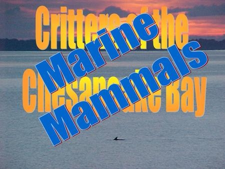 General About 30 different marine mammals have been reported in Virginias coastal areas.