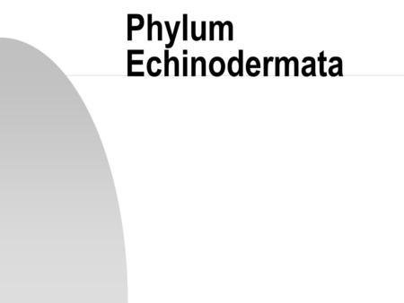 Phylum Echinodermata. Introduction n Echinodermata are all marine, triploblastic unsegmented coelomates n Phylum has 3 unique features: u pentagonal symmetry.