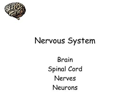 Nervous System Brain Spinal Cord Nerves Neurons.
