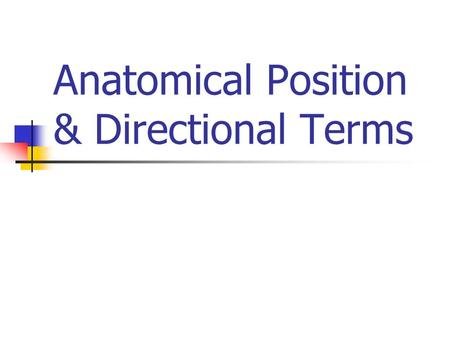 Anatomical Position & Directional Terms. Anatomic Position Body erect Arms to side Palms forward Head & neck forward.