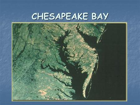 CHESAPEAKE BAY. Chesapeake as an Estuary An estuary is a semi-enclosed body of water that has a free connection with the sea An estuary is a semi-enclosed.