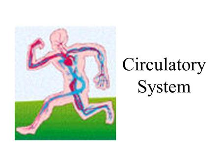 Circulatory System. Functions Transport oxygen and carbon dioxide Distribute nutrients Transport wastes Distribute hormones Regulate body temperature.