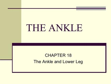 THE ANKLE CHAPTER 18 The Ankle and Lower Leg. Introduction Have you ever sprained your ankle, or do you know anyone who has? What did you do for it? How.