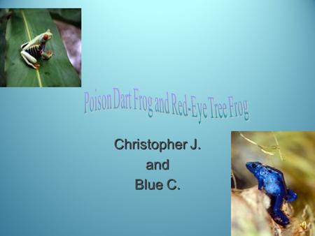 Christopher J. and Blue C. There are five different groups of animals with vertebrates Mammals Mammals Reptiles Reptiles Fish Fish Amphibians Amphibians.