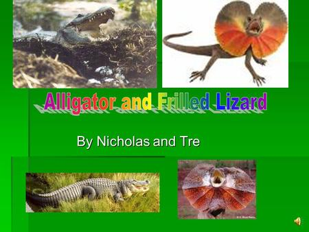 Alligator and Frilled Lizard