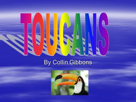 TOU can s TOUCANS By Collin Gibbons.