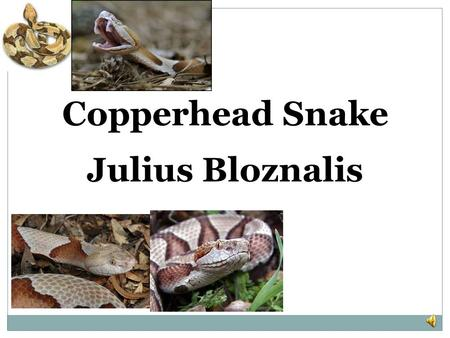Julius Bloznalis Copperhead Snake There are five different groups of animals with vertebrates. THEY ARE: MAMMALS FISH REPTILES BIRDS AMPHIBIANS.
