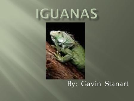 By: Gavin Stanart Iguanas have two eyes on their face and a third eye, called a parietal eye on the top of their head. This third eye does not see the.