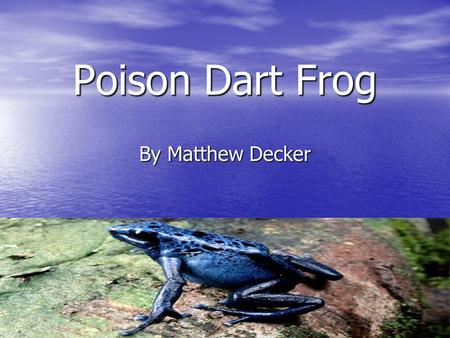Poison Dart Frog By Matthew Decker.