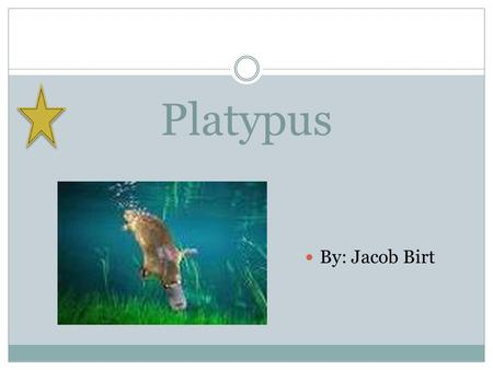 Platypus By: Jacob Birt. What it looks like A platypus is about the size of a house cat. It has a venomous spike. It can use it for a defense.