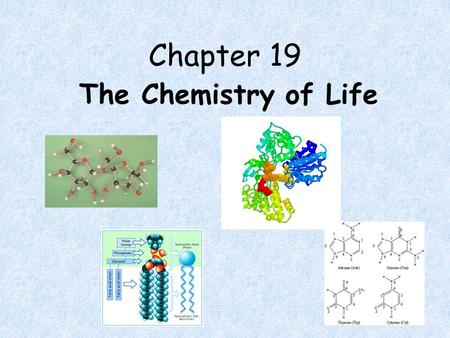 Chapter 19 The Chemistry of Life. The Molecules of Life 4 molecules necessary for life functions formed from smaller subunits – proteins – carbohydrates.