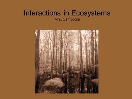 Interactions in Ecosystems Mrs. Campogni