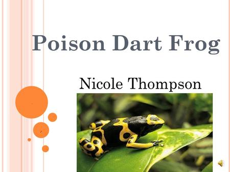 Poison Dart Frog Nicole Thompson THERE ARE FIVE DIFFERENT GROUPS OF ANIMALS WITH VERTEBRATES. Mammals Fish Reptiles Birds Amphibians.