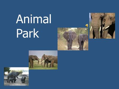 Animal Park Today we will read about a park in Africa. People can watch wild animals there. What animals do you know that live in Africa?