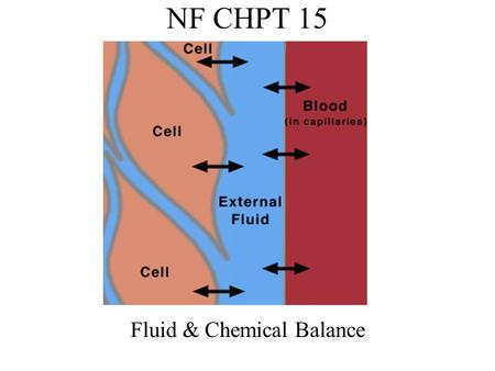 NF CHPT 15 Fluid & Chemical Balance. The Bodys Fluids Water is the most important solvent in the body Water transports wastes Water carries nutrients.