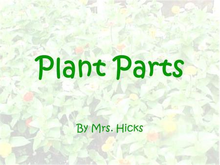 Plant Parts By Mrs. Hicks.