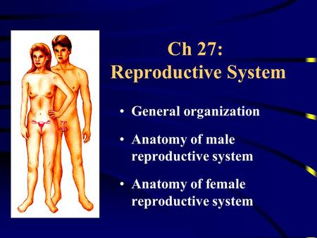 Ch 27: Reproductive System General organization Anatomy of male reproductive system Anatomy of female reproductive system.