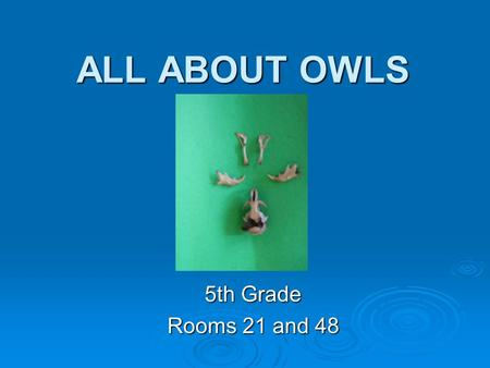 ALL ABOUT OWLS 5th Grade Rooms 21 and 48.