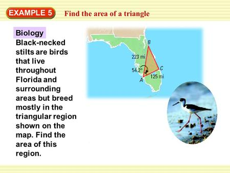 EXAMPLE 5 Find the area of a triangle Biology Black-necked stilts are birds that live throughout Florida and surrounding areas but breed mostly in the.