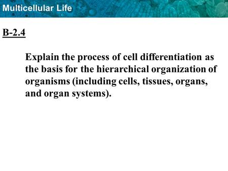 B-2.4 Explain the process of cell differentiation as 	the basis for the hierarchical organization of 	organisms (including cells, tissues, organs, 	and.