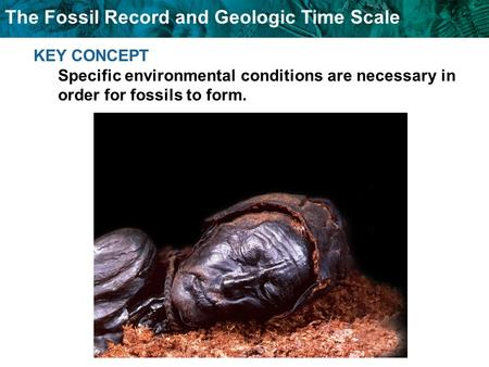 The Fossil Record and Geologic Time Scale KEY CONCEPT Specific environmental conditions are necessary in order for fossils to form.
