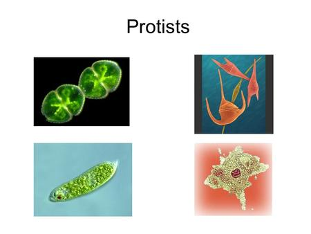 Protists. PROTISTS We have already learned about Bacteria and Viruses Now its time to study Protists MICROBES: 1.Viruses 2.Bacteria 3.Protists 4.?