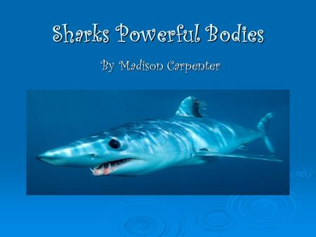 Sharks Powerful Bodies By Madison Carpenter. Did you know ? Sharks have no bones but they have cartilage. Sharks have no bones but they have cartilage.