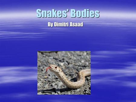 Snakes Bodies By Dimitri Asaad. Snakes are Reptiles. Snakes are Reptiles. They are related to lizards, turtles, alligators and crocodiles. They are related.