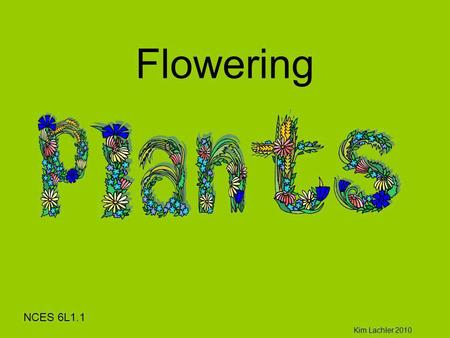 Flowering Kim Lachler 2010 NCES 6L1.1. Plants Why are plants important to you? The_Plant_Life_Cycle_and_Us.mov Plants Are living (Biotic) They grow Reproduce.