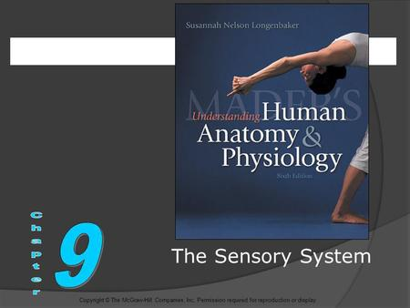The Sensory System Copyright © The McGraw-Hill Companies, Inc. Permission required for reproduction or display.