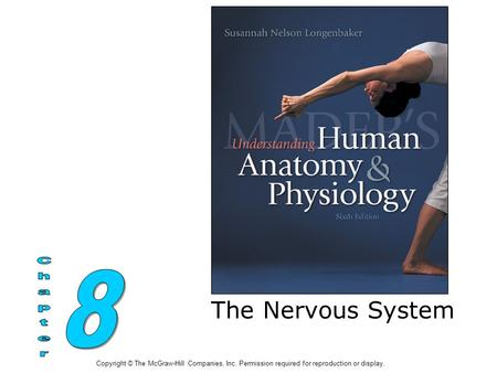 The Nervous System Copyright © The McGraw-Hill Companies, Inc. Permission required for reproduction or display.