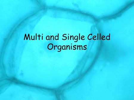 Multi and Single Celled Organisms
