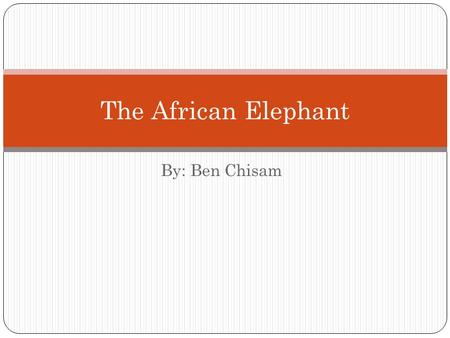 By: Ben Chisam The African Elephant. The Species The African Elephant is divided into two different sub- species; The African Savannah Elephant which.