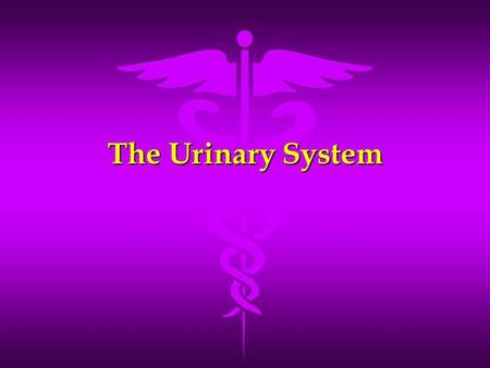The Urinary System. Functions of the Urinary System Maintains homeostasis of blood Maintains homeostasis of blood –Remove waste products –Restore selected.