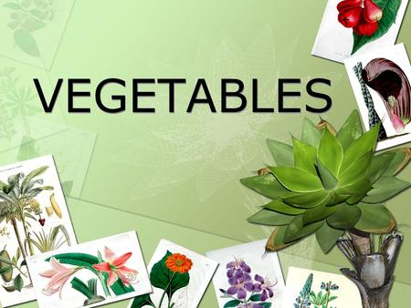 VEGETABLES Vegetables The term vegetable refers to any herbaceous plant that can be partially or wholly eaten The plant has no woody tissue Vegetables.