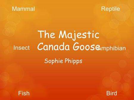 Sophie Phipps The Majestic Canada Goose Mammal Reptile BirdFish Insect Amphibian.