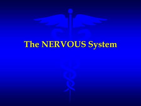 The NERVOUS System. Functions of the Nervous System l Sensory –senses stimuli from both within the body and from the external environment l Integrative.