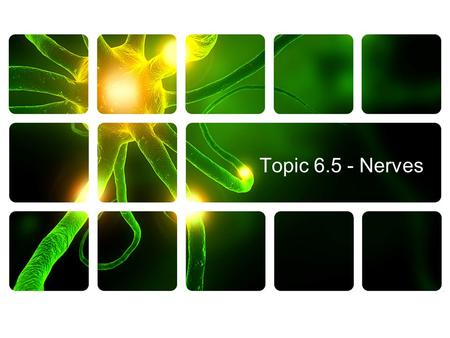 Topic 6.5 - Nerves.