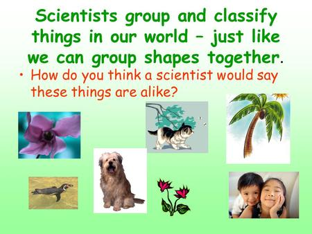 Scientists group and classify things in our world – just like we can group shapes together. How do you think a scientist would say these things are alike?