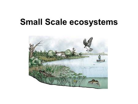 Small Scale ecosystems. Micro habitats e.g. under leaf Habitats e.g. freshwater pond Zones e.g. layers of the rain forest Biomes e.g. Tropical rainforest.