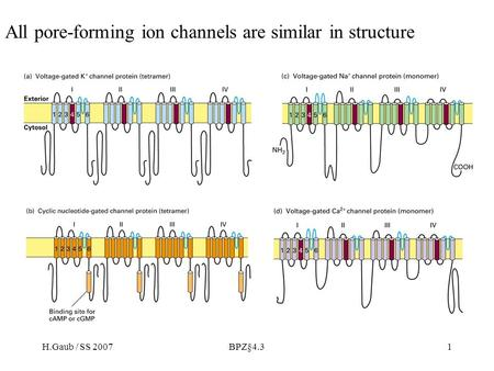 H.Gaub / SS 2007BPZ§4.31 All pore-forming ion channels are similar in structure.