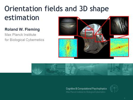 1 Orientation fields and 3D shape estimation Roland W. Fleming Max Planck Institute for Biological Cybernetics.