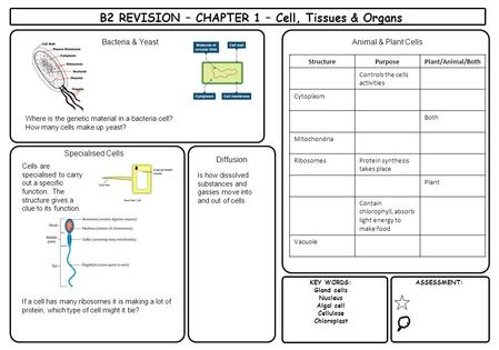 B2 REVISION – CHAPTER 1 – Cell, Tissues & Organs